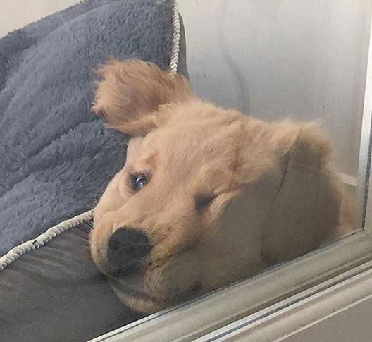 강아지.jpg